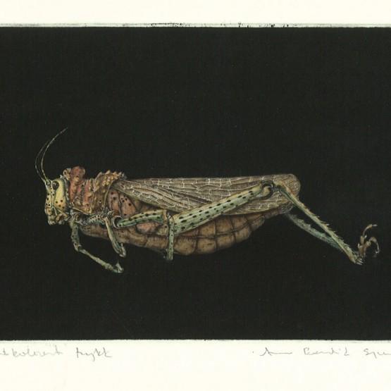 Arne Bendik Sjur - gresshoppe